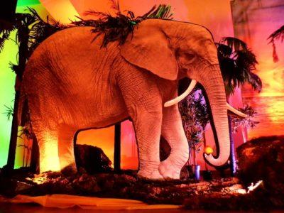 Safari dekoracja eventowa